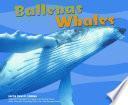 Ballenas/Whales