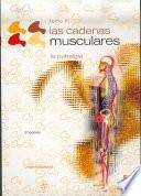 CADENAS MUSCULARES, LAS (Tomo III).La Pubalgia