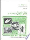 Cercopidos plagas de los pastos en America Tropical. Biologia y Control.