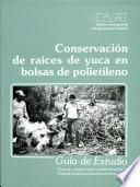 Conservacion de raices de yuca en bolsas de polietileno