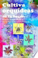 Cultiva orquídeas en tu hogar. Vive la magia exótica de la flor más aristocrática
