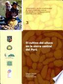 El cultivo del ulluco en la sierra central del Perú