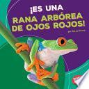 ¡Es una rana arbórea de ojos rojos! (It's a Red-Eyed Tree Frog!)