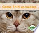 Gatos Fold escoceses