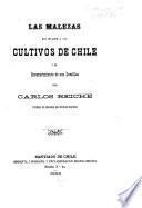 Las malezas que invaden a los cultivos de Chile y del reconociemiento de sus Semillas