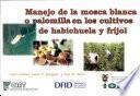 Manejo de la mosca blanca o palomilla en los cultivos de habichuela y frijol