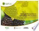 Manejo fitosanitario del cultivo de la mora (Medidas para la temporada invernal)