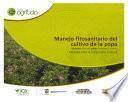 Manejo fitosanitario del cultivo de la papa (medidas temporada invernal)