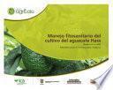 Manejo fitosanitario del cultivo del aguacate Hass (Persea americana Mill) medidas para la temporada invernal