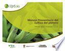 Manejo fitosanitario del cultivo del plátano (Medidas para la temporada invernal)