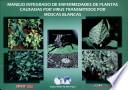 Manejo integrado de enfermedades de plantas causadas por virus trasmitidos por moscas blancas