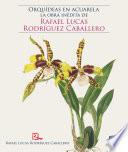 Orquídeas en acuarela: la obra inédita de Rafael Lucas Rodríguez Caballero