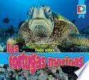 Todo sobre las tortugas marinas