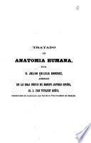 Tratado de anatomia humana